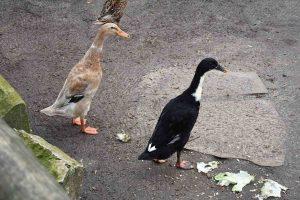 DAP24 Patenschaft Tierpark Hamm